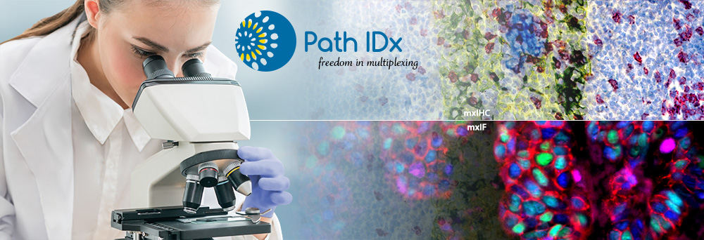 Path IDx: Freedom in Multiplexing